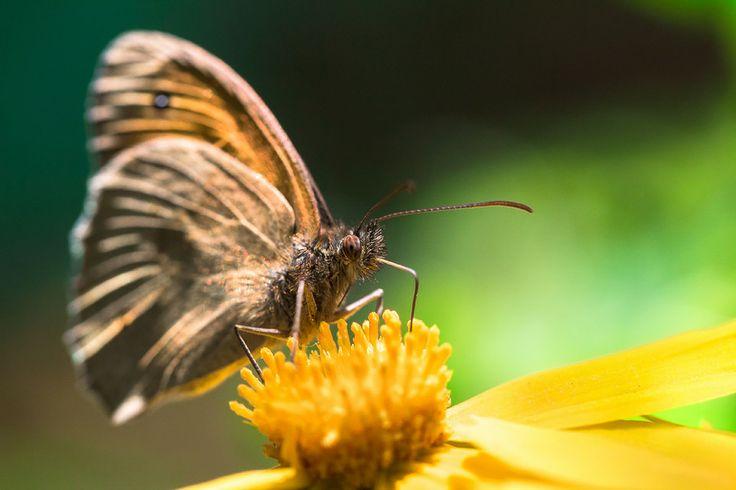 butterfly by Sergey Irkhin on 500px