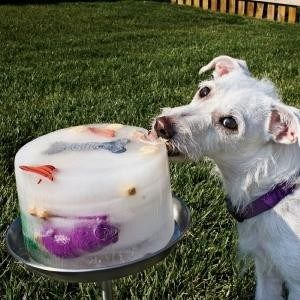 How To Make A Doggie Ice Lick (Fantastic Boredom Buster!)