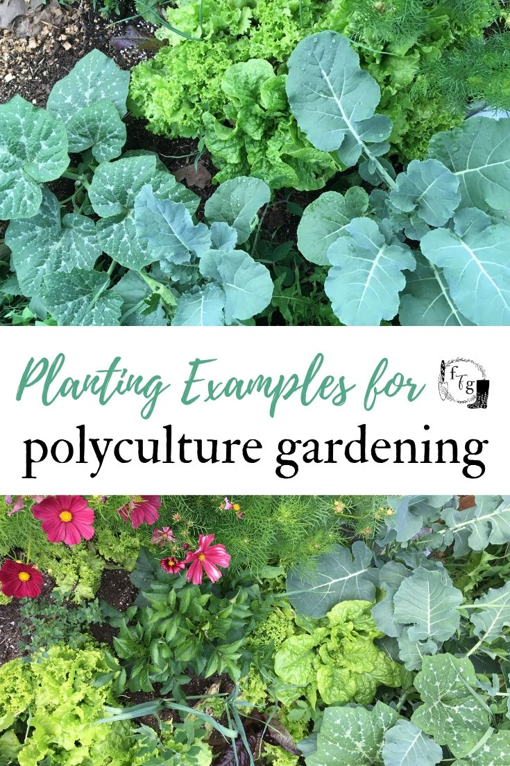 Polyculture Gardening Examples Family Food Garden Organic Vegetable Garden Food Garden Organic Gardening Tips