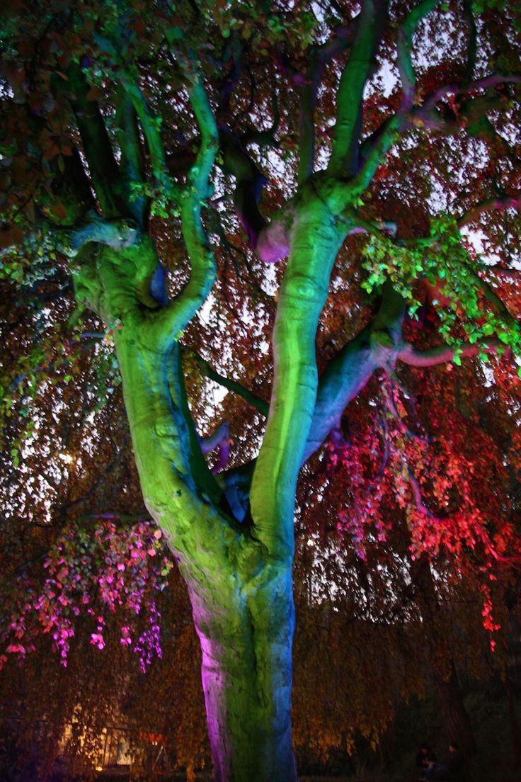 Performance in Lighting e AmbienteParco insieme per M'illumino di meno