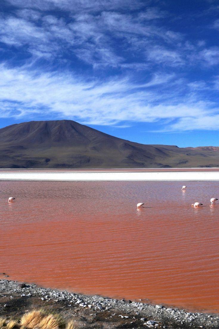 Laguna Colorada, Salar de Uyuni Tour, Bolivia ************************************************************************************** Things to do in San Pedro de Atacama, Salar de Uyuni Tours, South America tours, things to do in South America.