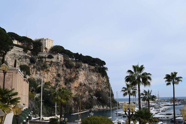 Monaco palms 🌴