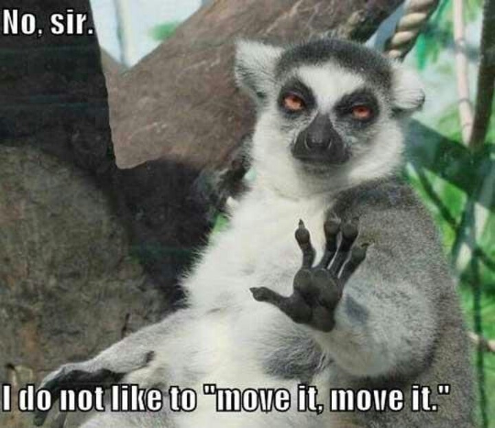 Not king julian Funny animal photos, Funny animal