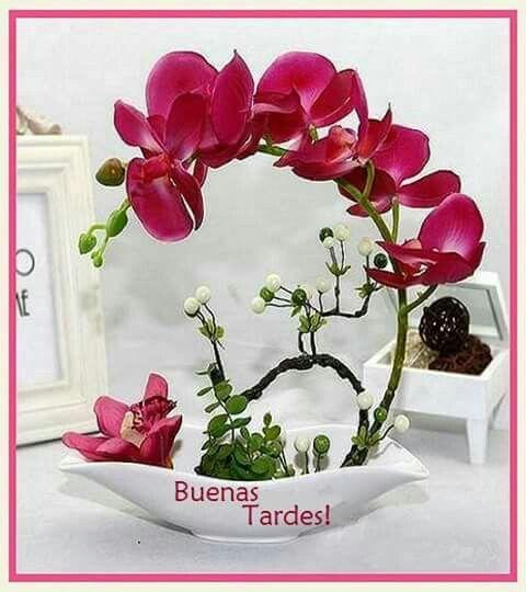 Buenos días,Tardes, Noche JULIO 2018 53540526aad61f09741d9e03b93e192e