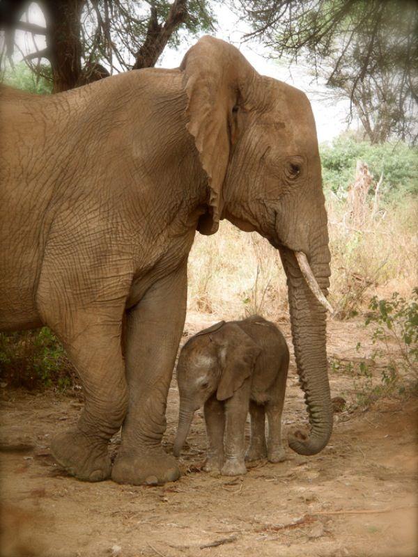 Elefante bebé y su mamá