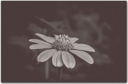 Thankful | Botanical, Black and White Collection | George Fivaz Fine Art Photography Gallery | Limited edition print available for purchase  on www.georgefivaz.com