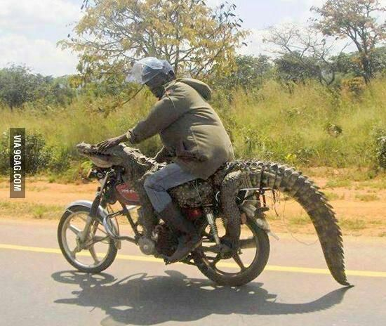 Lacoste motorcycle