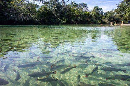 The Pantanal Wetlands in Brazil