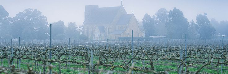 Mist in the Vines :: Clare Valley, South Australia