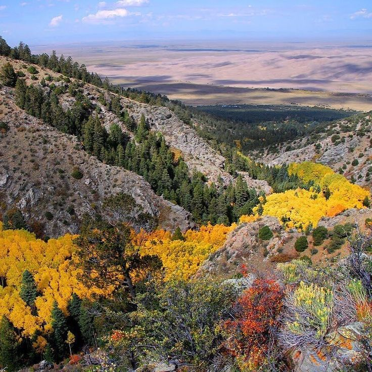 #Fall brings dramatic color to #GreatSandDunes National Park and Preserve in #Colorado. Dense colonies of #aspens grow in moist soil sharing a root system and changing their leaves in unison. Like a river of gold these gorgeous trees fill Morris Gulch high in the mountains above the sand dunes. Photo @greatsanddunesnps by Patrick Myers #NationalPark Service. #FindYourPark #usinterior