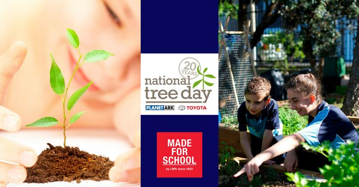 Schools Tree Day is next Friday if your kids aren't involved then as a family you can join in National Tree Day on the weekend, read about it on today's blog - Natalie