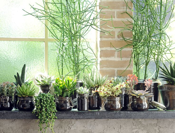 Plante tendance et facile d'entretien, la succulent, plante verte très résistante, convient à tous les intérieurs.