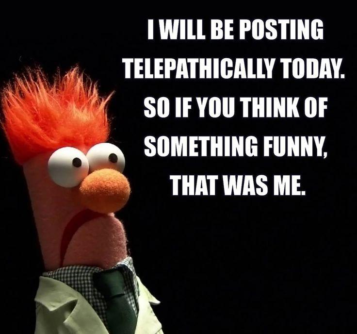 Funny Muppet Meme: 61 Best Beaker Muppetshow Images On Pinterest