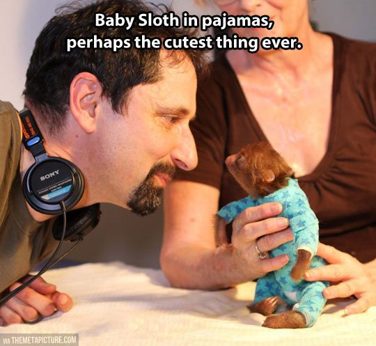 Baby sloth in pajamas