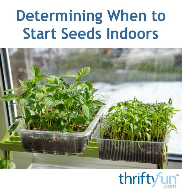 This is a guide about determining when to start seeds indoors. Knowing your hardiness zone, frost dates, and the germination time line for your chosen seeds is important to deciding when to start seeds indoors.