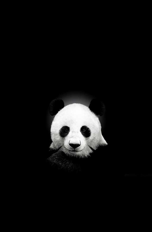 Amoled Wallpapers Source Line Deco Cute Panda Wallpaper Dark Wallpaper Iphone Panda Wallpaper Iphone Cute black panda wallpaper