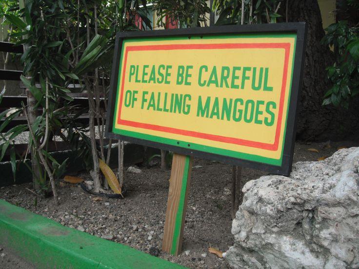 please be careful of falling mangos :) Bob Marley Museum, Kingston, Jamaica