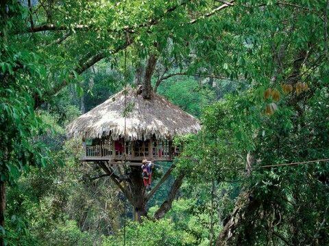 Жилища на деревьях в Индонезии сооружают подобно сторожевым вышкам — на шести- или семиметровой высоте над землей. Постройку возводят на заранее подготовленной привязанной к ветвям площадке из жердей. Балансирующее на ветвях сооружение нельзя перегружать, но оно должно выдержать большую двускатную крышу, венчающую постройку. У такого дома устраивают два пола: нижний, из саговой коры, на котором расположен очаг для приготовления пищи, и верхний — настил из досок пальмы, на котором спят.