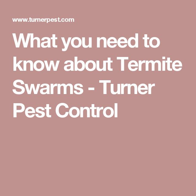 What you need to know about Termite Swarms - Turner Pest Control