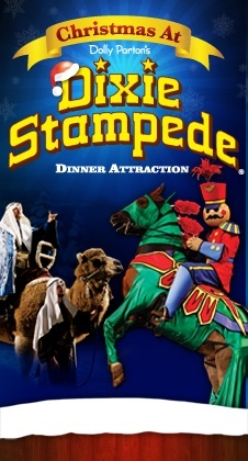 """Dixie Stampede's """"Christmas at Dixie"""" is the most spectacular Christmas show ever! With amazing stunt riders, magnificent horses and a live nativity scene it is surely a show you will remember for generations!"""
