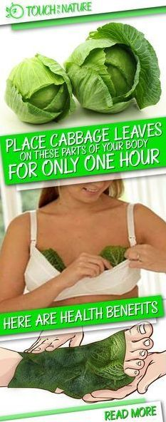 Cabbage leaves operate like a magnet for a lot of ailments within the physique. Furthermore, the cabbage could be very useful for treating ...