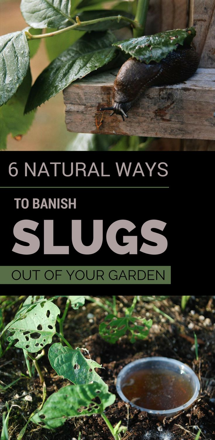 90 Best Garden Home Made Pest Control Images On Pinterest Garden Pests Garden Bugs And