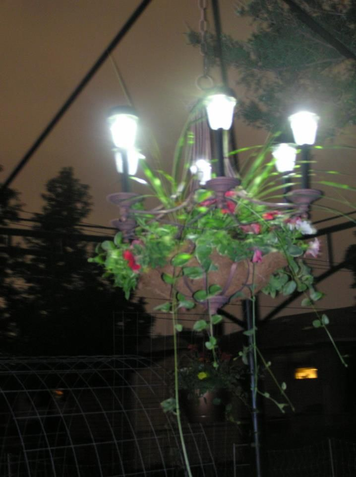 this was originally an electric chandelier added the coconut mat and live plants the electric was cut and solar yard lights slid perfectly over the