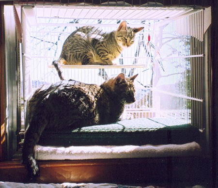 cat window box and enclosure made from wire shelving and. Black Bedroom Furniture Sets. Home Design Ideas