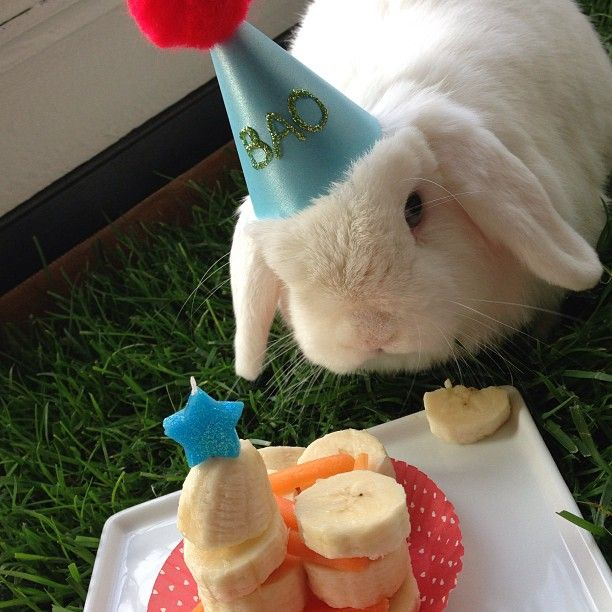 3rd birthday, Boas and Carrots on Pinterest