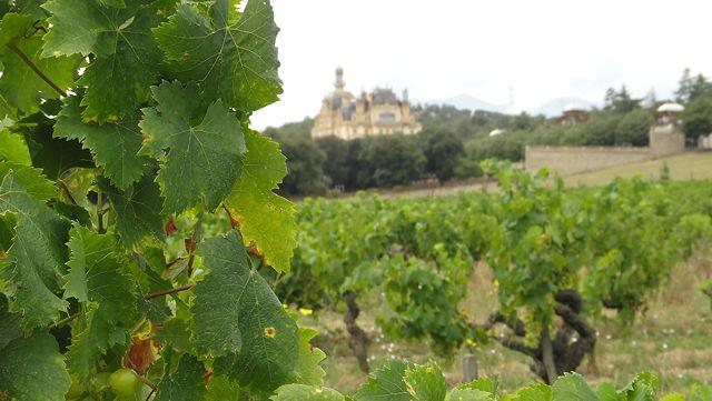 Slott og vinranker