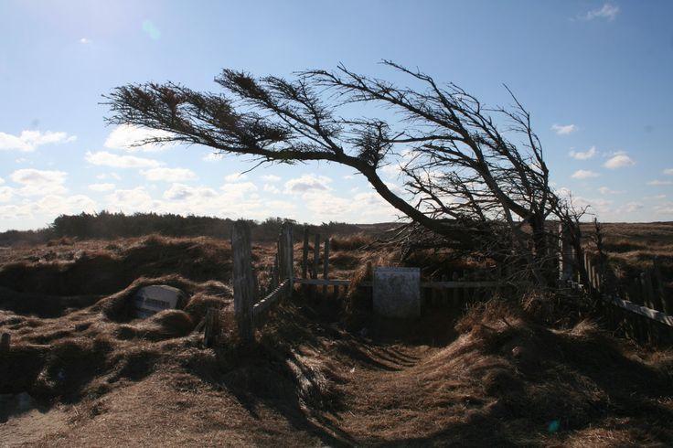 busker | Hagegnomen Bjarnes hageblogg: Busker og trær med hentesveis