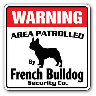 Buldogues franceses não são cães de guarda http://ift.tt/2tKyywS