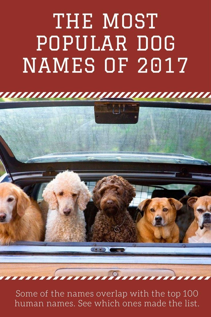 The Most Popular Dog Names Of 2017 Popular Dog Names Most