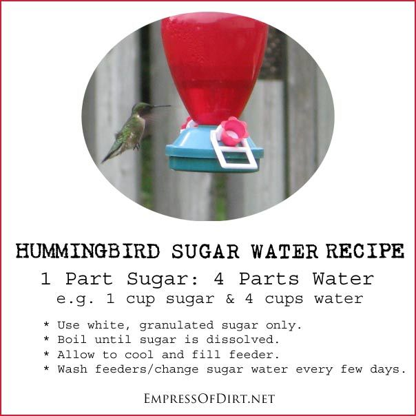 Recipes for making hummingbird sugar water