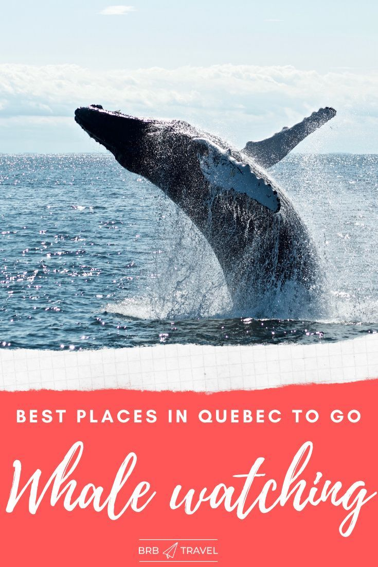 Whale Watching In Quebec Brb Travel Blog In 2020 Whale Watching Canada Travel Guide Canada Travel