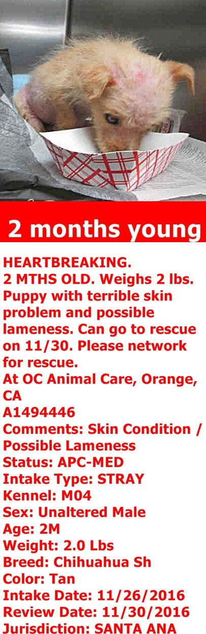 RESCUED 11/30/16 --- OC Animal Care. 561 The City Drive South, Orange, CA. 92868 Telephone: 714.935.6848 Hours: Monday - Sunday 11:00am - 5:00pm Wed -11:00am - 7:00pm   https://www.facebook.com/AngelsForAnimals.AFA/photos/a.10157748110680223.1073742040.315830505222/10157795611015223/?type=3&theater