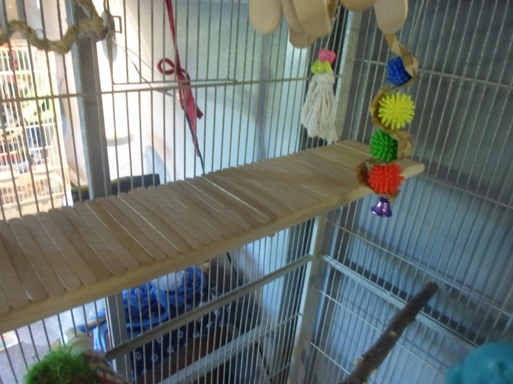 DIY Platform Perch...this would be great for Laci's turned in feet.