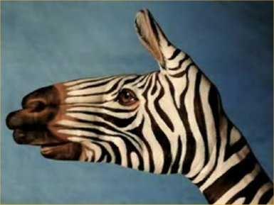 Hand Zebra