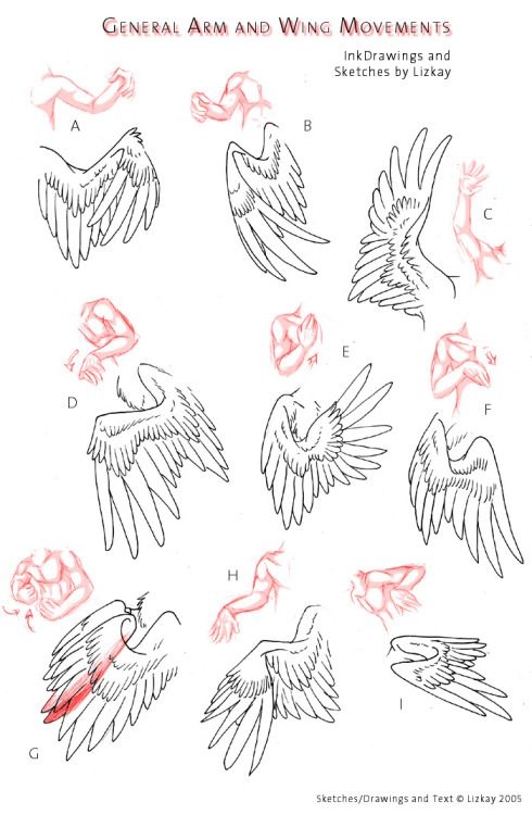 Folded Bird Wings Drawing