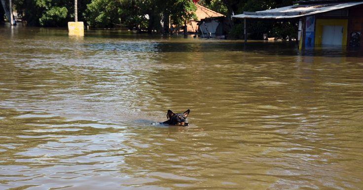 Demos un hogar a los perritos de la calle víctimas de la inundación FIRMA Y COMPARTE ESTA...