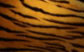 WALLPAPERS HD: Tiger Skin