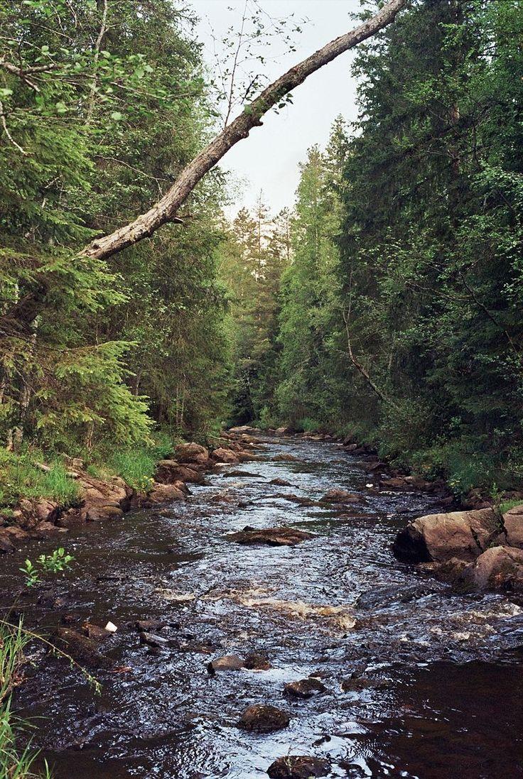 Little river in Muhos Jun2009.jpg