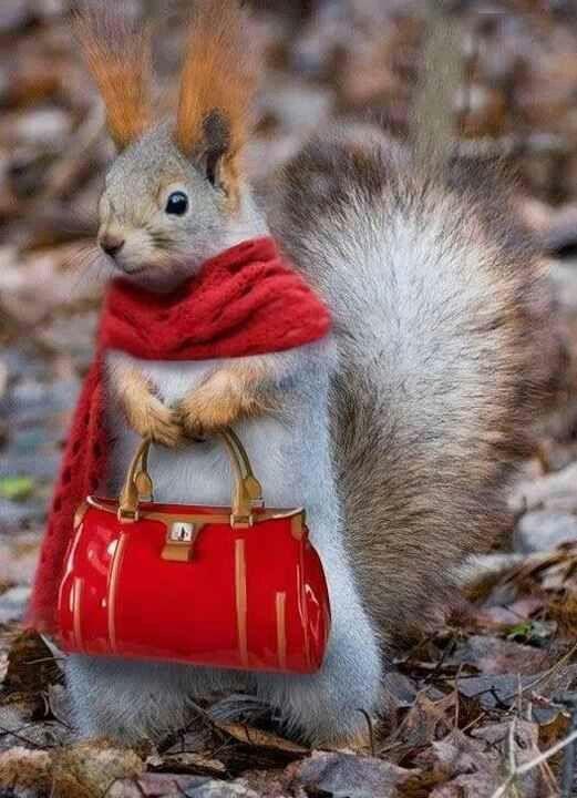 Fashion Model Squirrel : - )