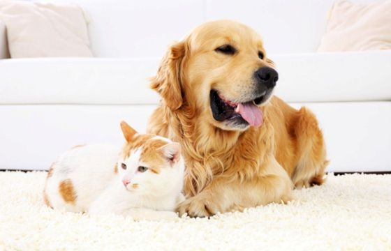 Come togliere i peli degli animali domestici da mobili, pavimenti e tessuti