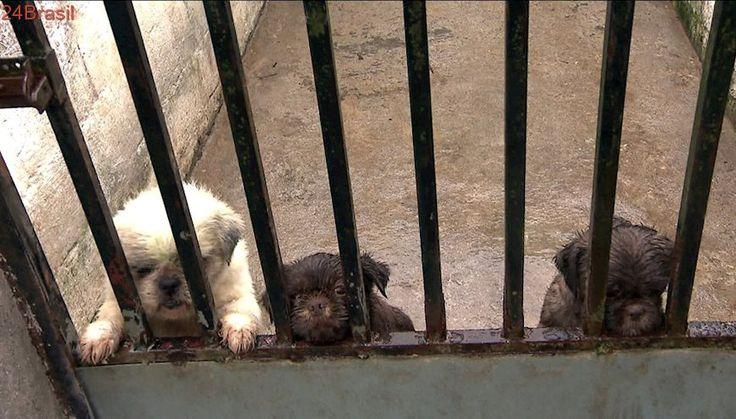 Criminosos rendem funcionários e sequestram 40 cães de canil em Juquitiba