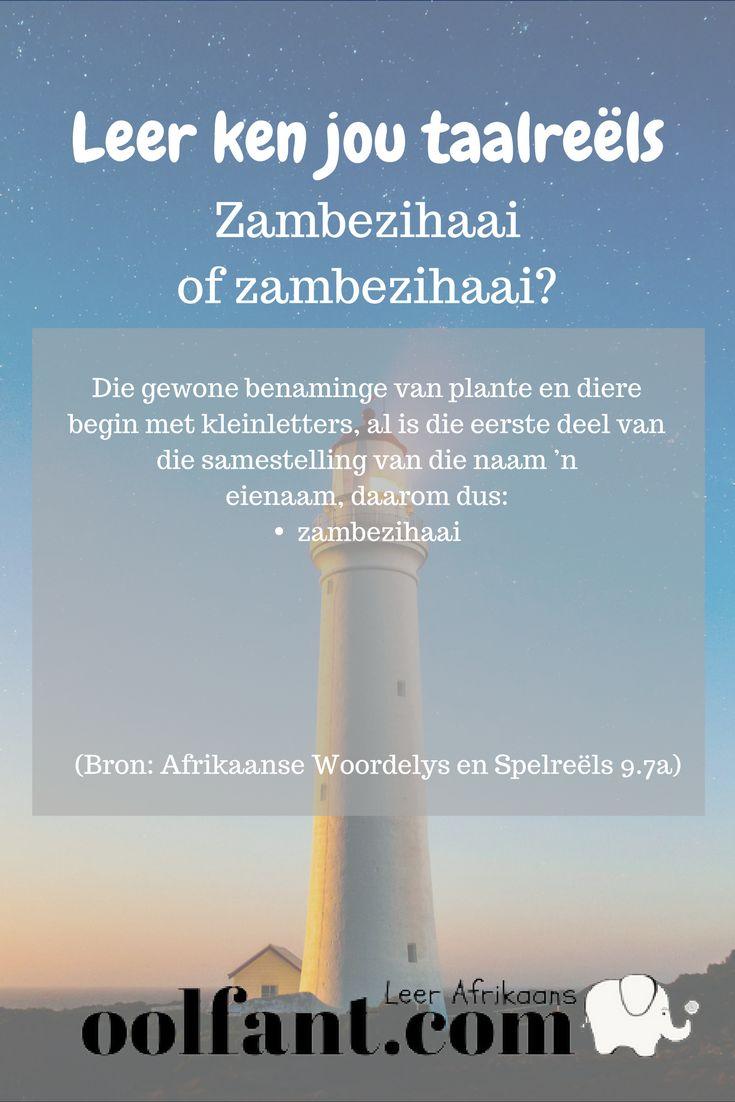 Zambezihaai of zambezihaai | Hoofletter of kleinletter | Afrikaanse taalreëls | Beter Afrikaans