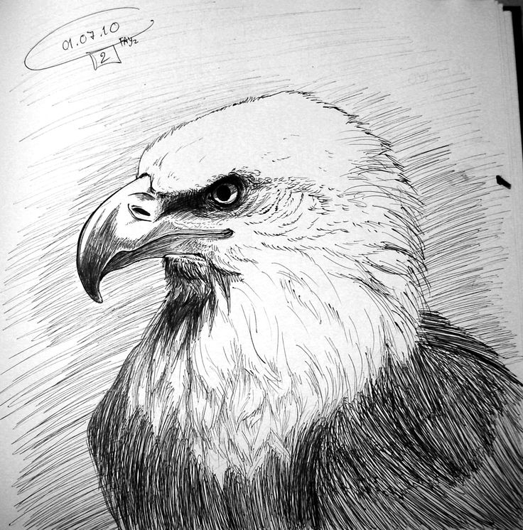 1000+ ideas about Eagle Drawing on Pinterest | Bird ...