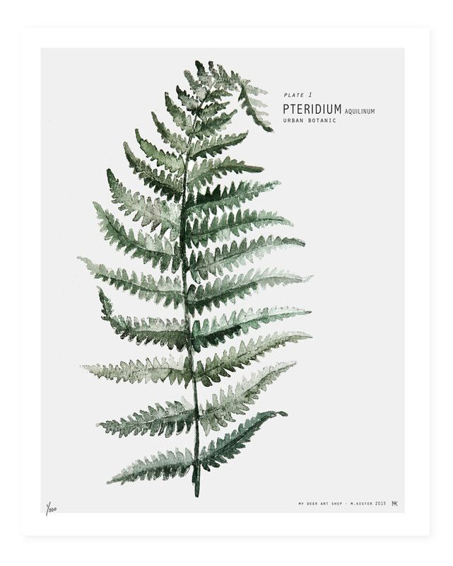 urban botanic postcards - Google zoeken