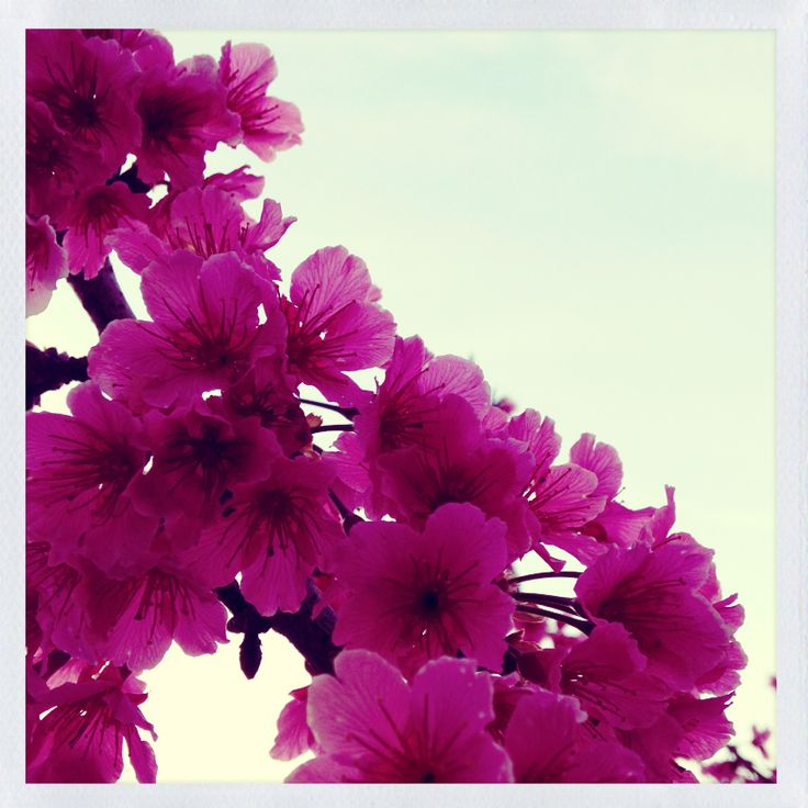 C'est Bon .Flowers