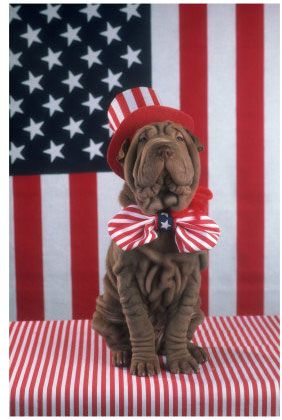 Happy 4th July to all of our American Friends! #IndependenceDay